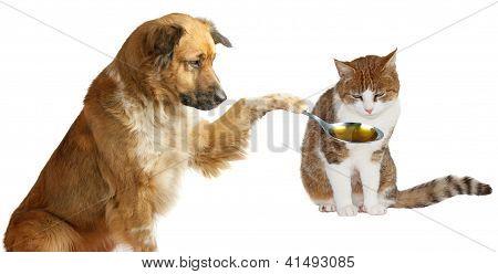 Adorable Dog Veterinarian