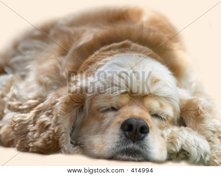 Young Dog Sleeping