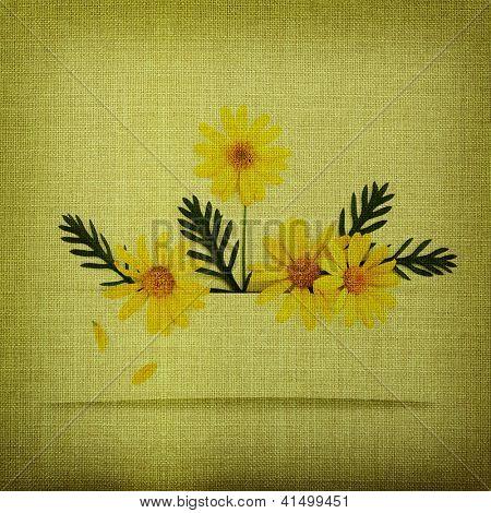 Daisy flowers on fabric texture
