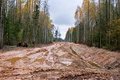 stock photo of dangerous situation  - Real latvian road through the autumn forest it - JPG