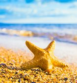 pic of starlet  - Under the Sun Sea Starlet - JPG