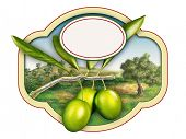 Olive oil label with a beautiful country landscape. Digital illustration, copy-space available, clip