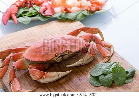 Prepearing Dungeness Crab And Red Lobster