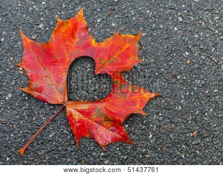 Fall In Love Photo Metaphor. Red Maple Leaf With Heart Shaped Hole Lays On Dark Asphalt Road
