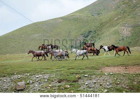 Beautiful many-coloured horses