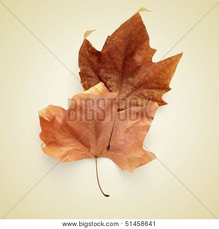picture of a pile of dried leaves in autumn with a retro effect