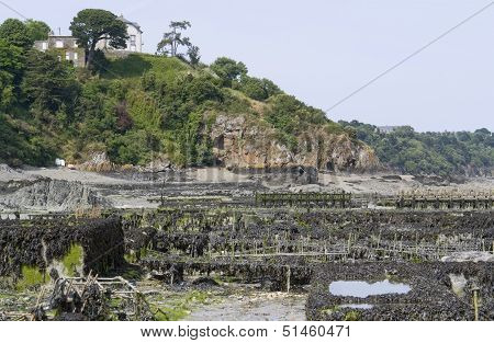 Oyster Beds At Cancale