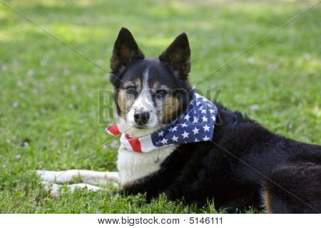 American Pride - Dog With Flag Bandanna