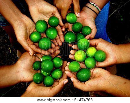 Lemons in my hands