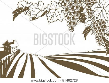 Vineyard Grapevine Farm Illustration