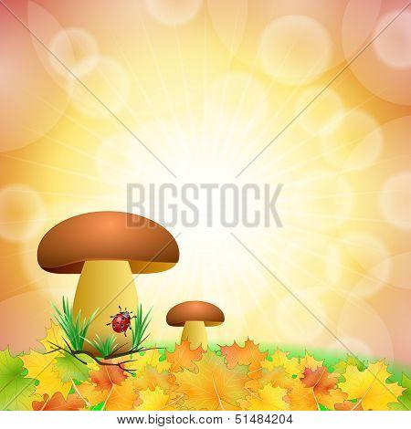 mushroom autumn background