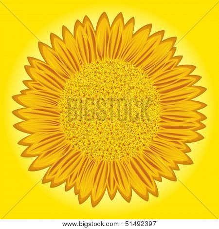 Sunflower On Yellow Background