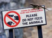 Please Do Not Feed The Animals poster