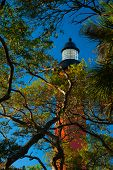 stock photo of inlet  - Low angle view of trees with Ponce de Leon Inlet Lighthouse And Museum in the background Daytona Beach Florida USA - JPG