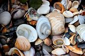 picture of exoskeleton  - Seashells come in a variety of colors and shapes - JPG
