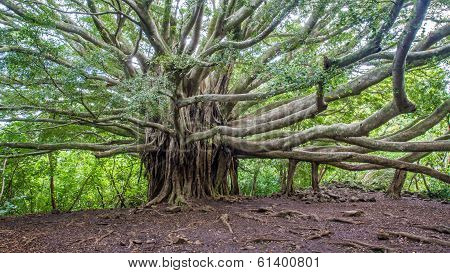 Banyan tree of life