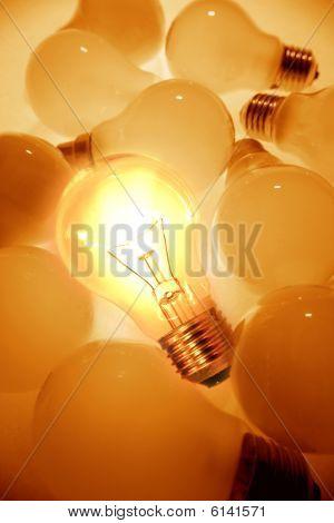 Bulbs.