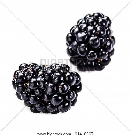 Blackberries Isolated On White Background, Close Up. Summer Black  Berries,  Macro.