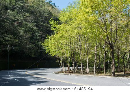 Green tree in spring with road at sun moon lake, the famous attraction in Taiwan.