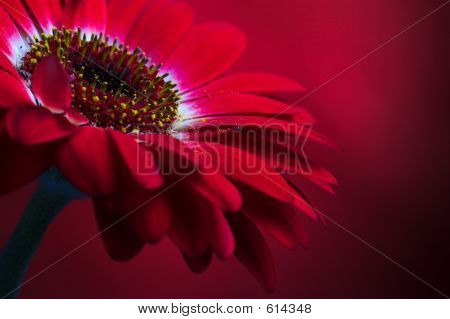 Red Flower Composition