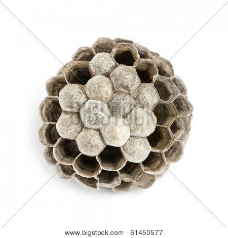 View from up high of a dry vespiary with empty and occupied cells, isolated on white