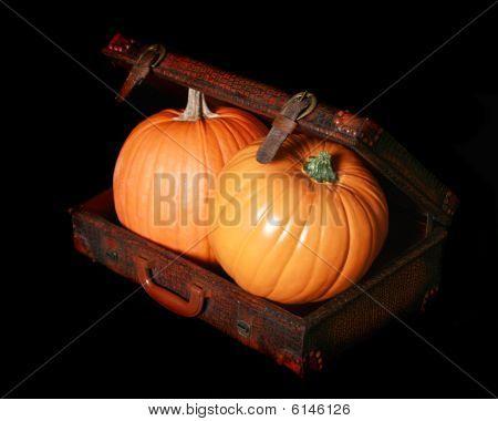 Two Pumpkins In An Alligator Briefcase