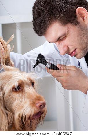 Dog During Otoscope Examination
