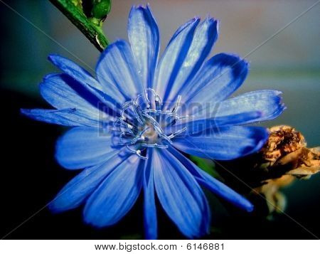 Blue Flower, Petal, Vegetation, Background, Texture