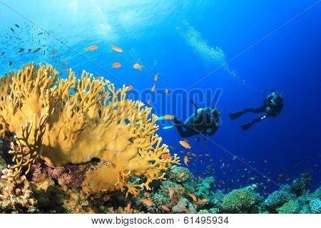 Scuba diving underwater over ocean coral reef
