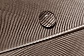 foto of teardrop  - Macro of water drop on feather detail pattern - JPG