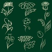 Set of line drawing flowers, hand drawn vector illustration