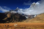 picture of donkey  - Donkeys in Cordiliera Huayhuash - JPG