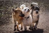 stock photo of sunshine  - A puppy and two adult mongrel dogs together form the four - JPG
