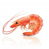 picture of tiger prawn  - Cooked shrimp isolated on white photo - JPG