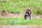 foto of macaque  - The macaque is a genus of the family of the Old World monkeys - JPG