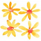 Orange watercolor flowers isolated over the white background