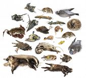 picture of decomposition  - Composition of dead animals in state of decomposition - JPG