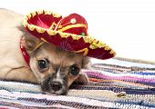 pic of mexican-dog  - Chihuahua puppy with native Mexican hat and mat on white background - JPG