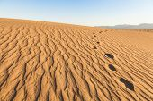 picture of mesquite  - Sand dunes of Mesquite Flat in Death Valley Desert  - JPG