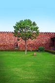 foto of manicured lawn  - lone tree stands in a quiet courtyard on a green lawn - JPG
