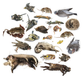 stock photo of decomposition  - Composition of dead animals in state of decomposition - JPG