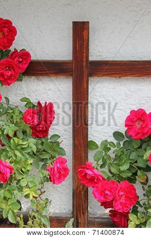 Rambler Rosebush And Wooden Cross