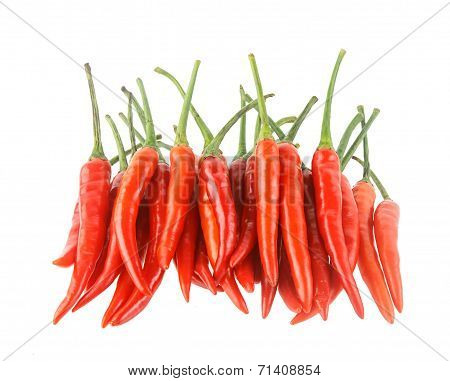 Chilli Peper Isolated On White Background