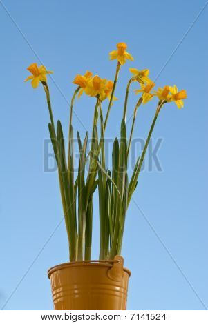 Buket With Daffodils
