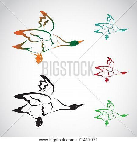Vector image of an flying wild duck
