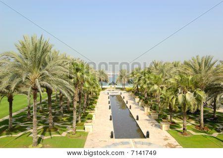 Palmeras en Hotel Recreation Area, Dubai, Emiratos Árabes Unidos