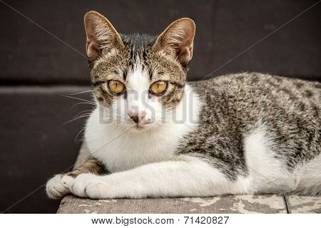Close Up Face Of Stray Cat In Portrait