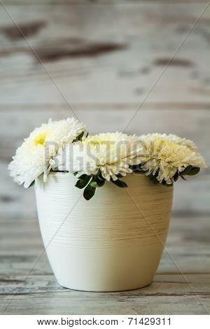 White Chrysanthems