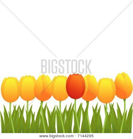 Vector tulip background