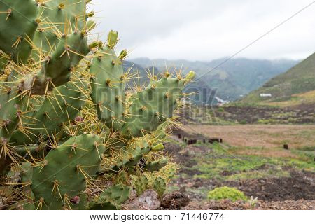 Cactus And Mountain (1)